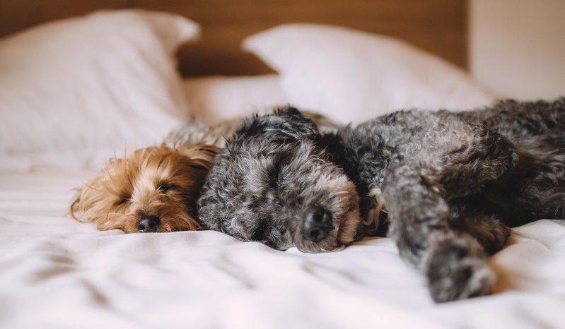 Wie häufig sollte man die Bettwäsche wechseln?