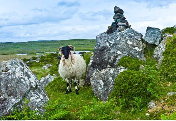 Die Römer und Irland