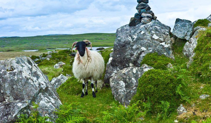 Warum eroberten die Römer nicht Irland?