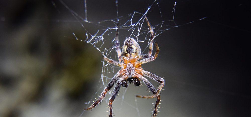 Warum drehen sich Spinnen nicht am Faden, wenn sie herunterhängen?