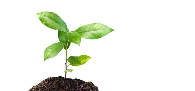 Ist mehr C02 gut für die Pflanzen?