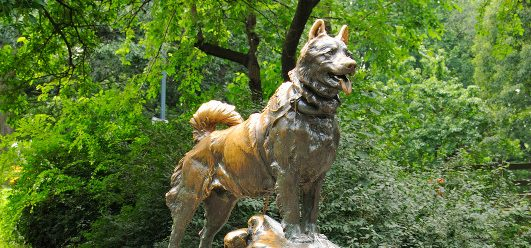 Warum steht im New Yorker Central Park ein Hundedenkmal?