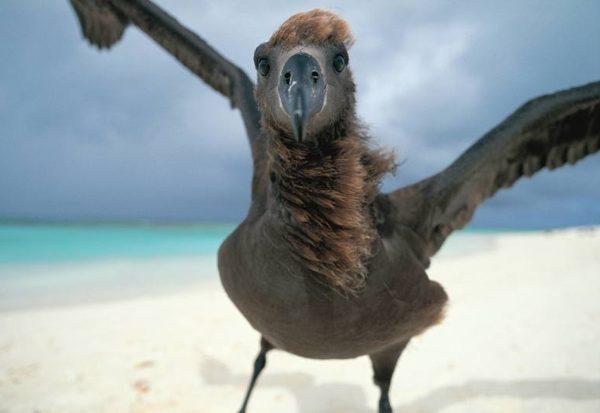 Gibt es Vogel-Tollpatsche?