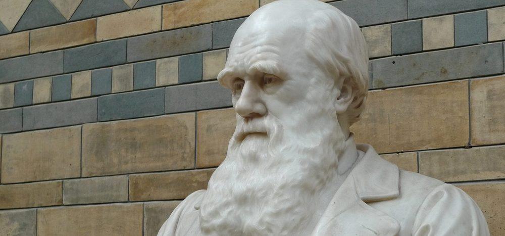 Hat Charles Darwin seine Ideen gestohlen?