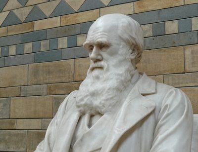 Hat Darwin Ideen geklaut?