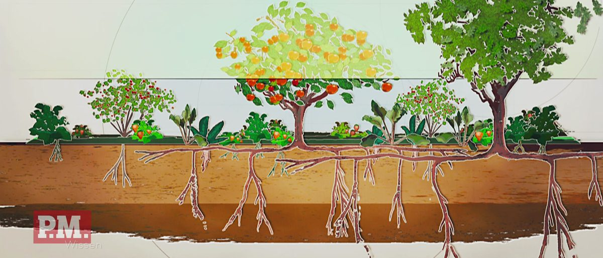 Plant, Tree, Art