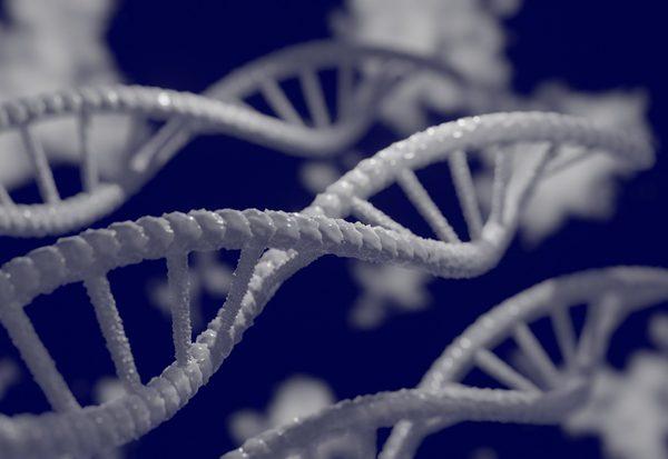 Was verraten Gene?