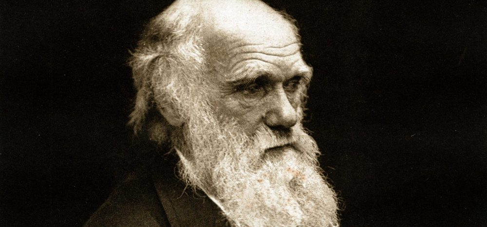 Was ist Evolutionsmedizin?