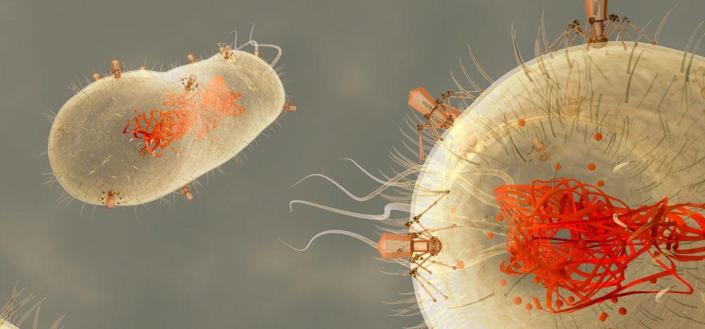 Wie wirken Bakteriophagen?