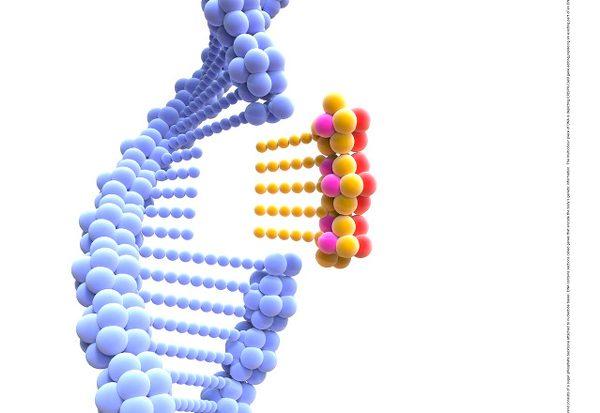 Wie können wir Gene heilen?