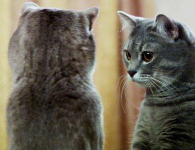 Wie spiegeln sich Tiere?