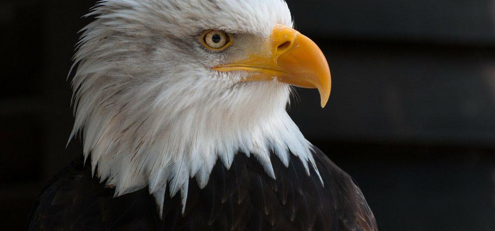 Warum sehen Adleraugen so scharf?