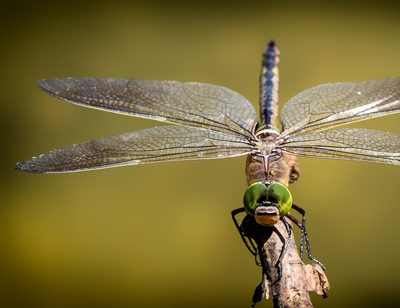 Wie groß werden Insekten?