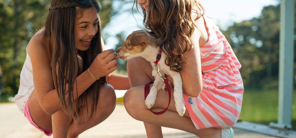 Retten Kinder eher Tiere oder Menschen?