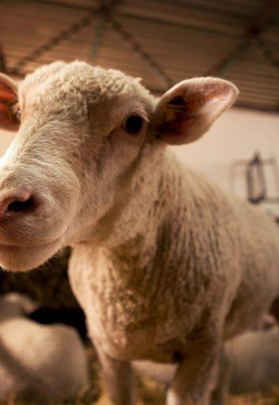 Welche Rechte haben Tiere?