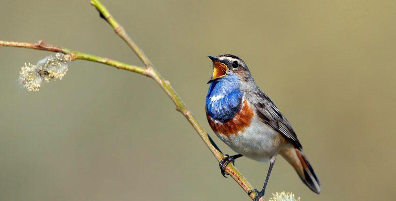 Frühlingskonzert der Vögel