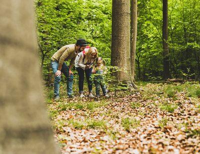 Immunstärkung im Wald?