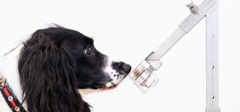 Können Hunde eine Krebsdiagnose stellen?