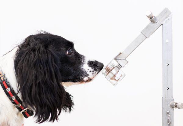Erkennen Hunde Krebs?