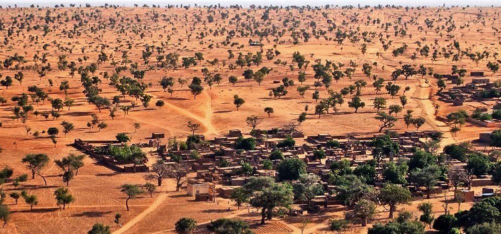 Wie viele Bäume wachsen in der Sahara?