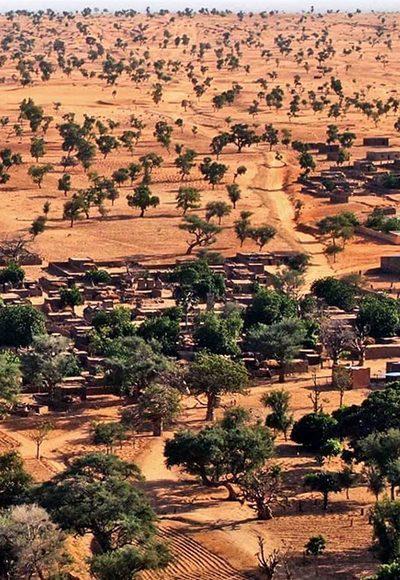 Viele Bäume in der Sahara?