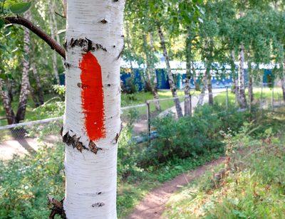 Zeichen an Bäumen verstehen